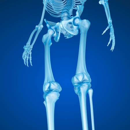 ścięgno: Ludzki szkielet: stawu kolanowego. Medycznie dokładne 3D ilustracji