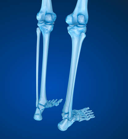 meniscus: Human skeleton: Knee joint. Medically accurate 3D illustration Stock Photo