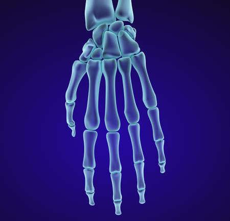 anatomía de la muñeca humana. vista de la radiografía. ilustración médica precisa en 3D