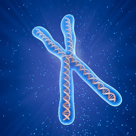 cromosoma: Cromosoma concepto de molécula, Ilustración médica precisa en 3D Foto de archivo