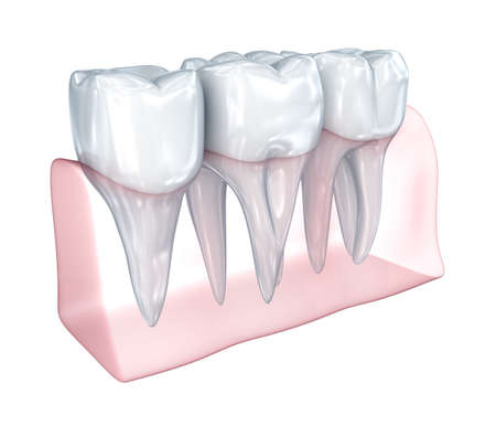 teeth white: Teeth on white background. Concept icon. Medically accurate 3D illustration