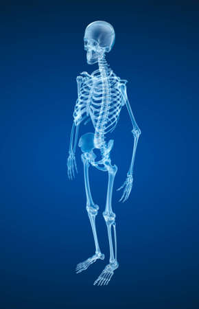 bony: Human skeleton, Medically accurate 3d illustration.