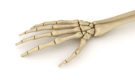medical exam: Human wrist skeletal anatomy. Medically accurate 3D illustration Stock Photo