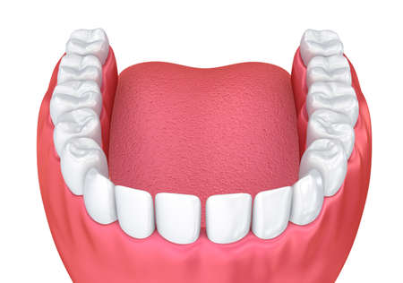 dentin: Mouth gum and teeth. Medically accurate tooth 3D illustration