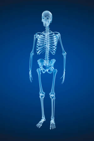 Human skeleton, Medically accurate 3d illustration.