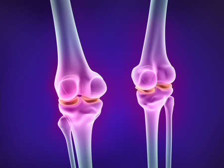 Knee xray view. Medically accurate 3D illustration