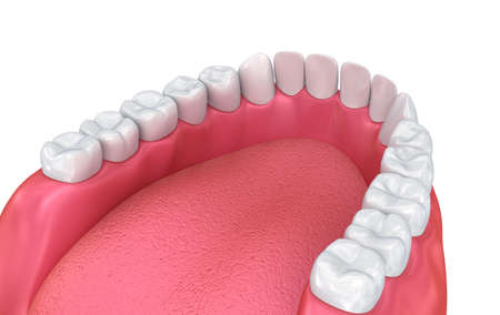 chew: Mouth gum and teeth. Medically accurate tooth 3D illustration