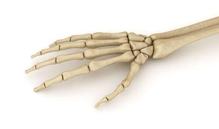 Human wrist skeletal anatomy. Medically accurate 3D illustration Stock Photo