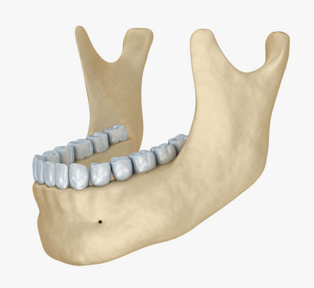 lower teeth: Lower jaw skeleton and teeth anatomy. Medical accurate 3D illustration Stock Photo