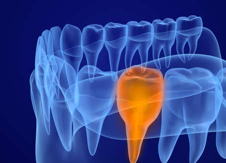 tongues: Mouth gum and teeth xray view. Medically accurate tooth 3D illustration
