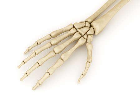 medical illustration: Human wrist skeletal anatomy. Medically accurate 3D illustration Stock Photo