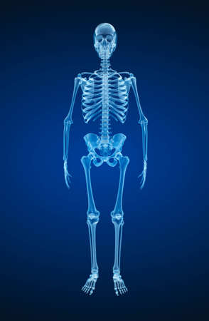 bony: Human skeleton, xray view. Medically accurate 3d illustration.