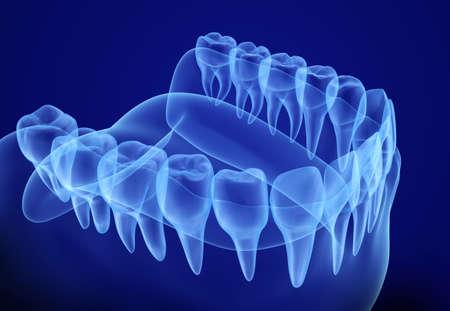 Mond tandvlees en tanden Xray uitzicht. Medisch nauwkeurige tand 3D illustratie