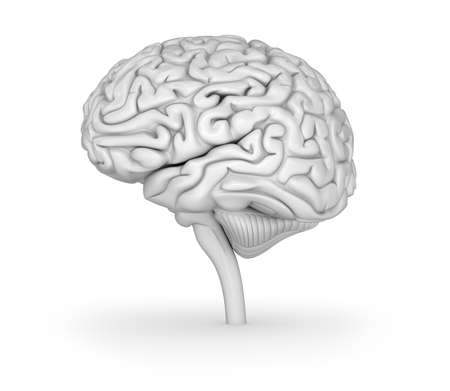 telepathy: Human brain 3D model. Medically accurate 3D illustration