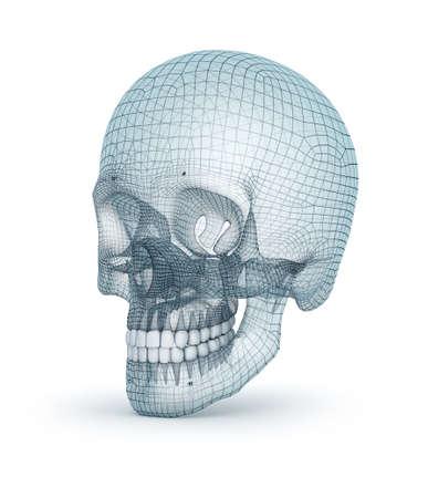 Human skull wire model, 3D render