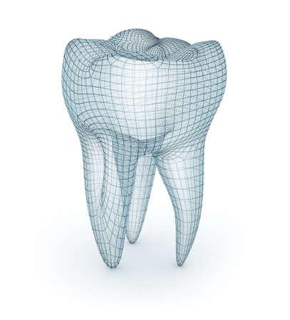 Diente molar humano, modelo de alambre, ilustración 3d Foto de archivo - 66609848