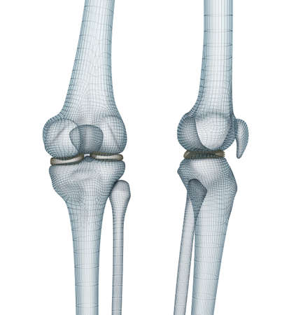 Knee joint anatomy. Medically accurate wire 3d illustration. Stock Photo