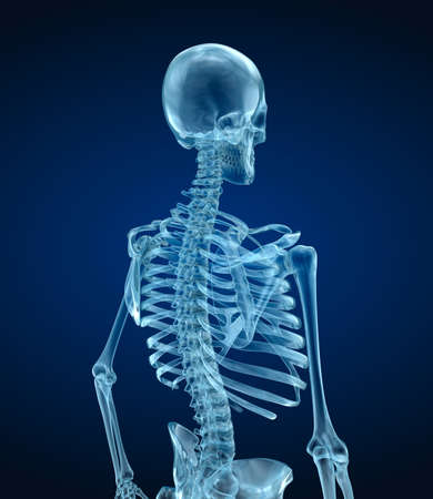 tibia: Human skeleton - head, Medically accurate 3d illustration. Stock Photo