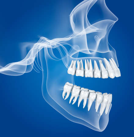 Transparent scull and teeth, xray view. 3D illustration.