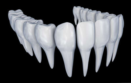 rentgen: Human Teeth 3d instalation. Medically accurate dentistry anatomy.