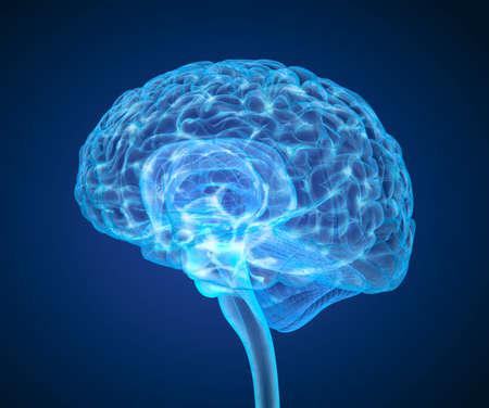 mente humana: El cerebro humano exploración de rayos X, la ilustración médica precisa en 3D