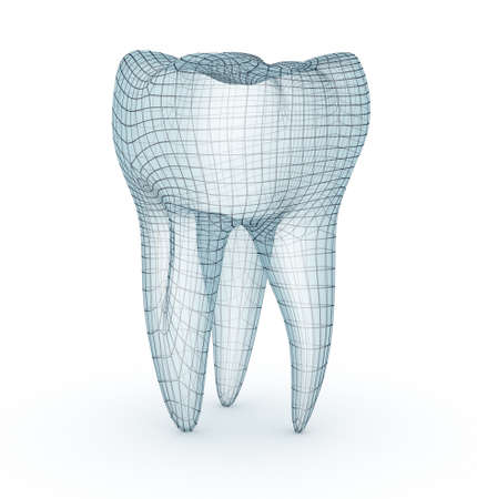 cleanliness: Human molar tooth model Stock Photo