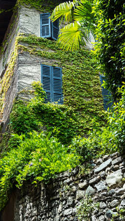 Green ivy over old italian home