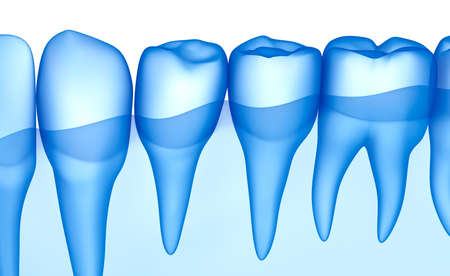 Transparent teeth scan, xray view . 3D illustration .