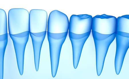 Transparent teeth scan, xray view . 3D illustration .