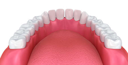 Mouth gum and teeth. Medically accurate tooth 3D illustration