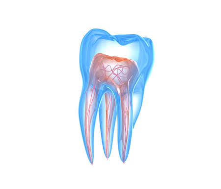 Transparent teeth. 3d renderings of endodontics inner structure over white background Reklamní fotografie