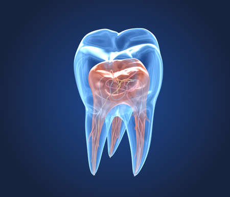 Transparent teeth. 3d renderings of endodontics inner structure