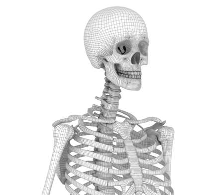 Human skeleton: chest. Medically accurate 3D illustration Stock fotó
