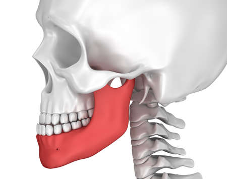 Human scull and marked lower jawl. 3D illustration . Stock Photo