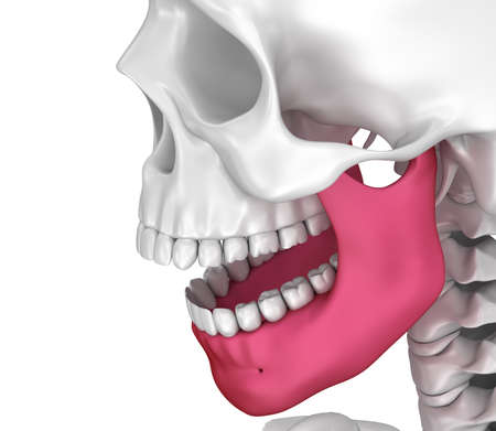 Human scull and marked lower jawl. 3D illustration .