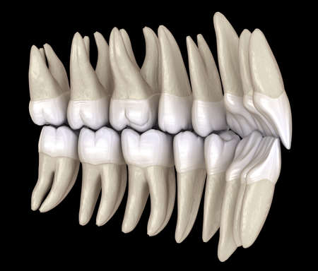 Healthy human teeth with normal occlusion from inside view. 3D Illustration Standard-Bild - 123152382