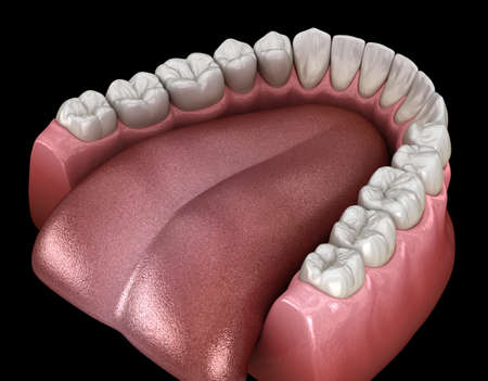 Mandibular human gum and teeth. Medically accurate tooth 3D illustration Stok Fotoğraf