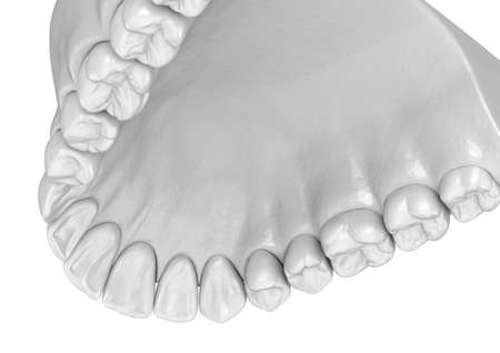 Maxillary human gum and teeth. Medically accurate tooth 3D illustration