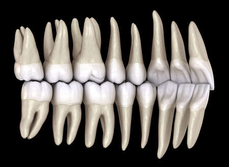 Healthy human teeth with normal occlusion from inside view. 3D Illustration