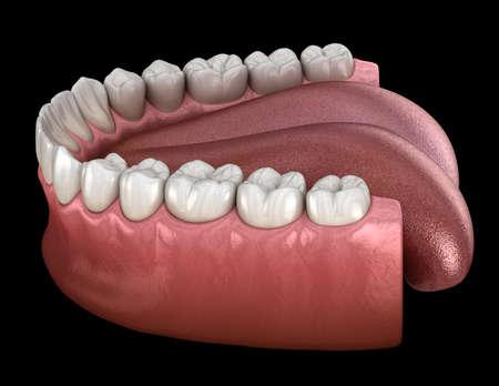 Mandibular human gum and teeth. Medically accurate tooth 3D illustration Stock Photo