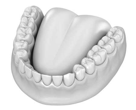 Mandibular human gum and teeth anatomy. Medically accurate tooth 3D illustration Stock Photo