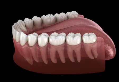Morphology of mandibular human gum and teeth. Medically accurate tooth 3D illustration