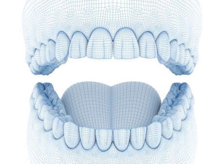 Morphology of mandibular human gum and teeth. Wire 3d model illustration
