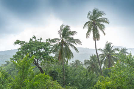 Tropical jungle and rain. Thailand landscape 写真素材