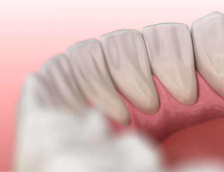 Mandibular human gum and teeth anatomy. Medically accurate tooth 3D illustration 写真素材