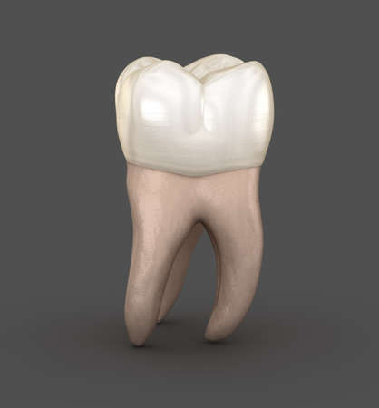 Dental anatomy - First maxillary molar tooth. Medically accurate dental 3D illustration
