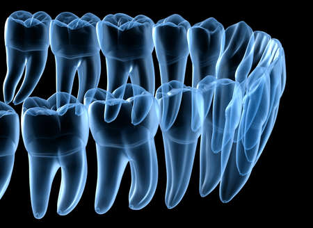 Dental Anatomy of mandibular human gum and teeth, x-ray view. Medically accurate tooth 3D illustration