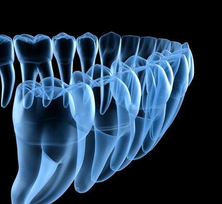Dental Anatomy of mandibular human gum and teeth, x-ray view. Medically accurate tooth 3D illustration Reklamní fotografie