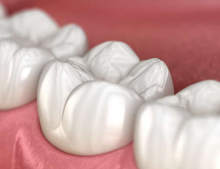 Healthy human teeth with normal occlusion, macro view. Medically accurate tooth 3D illustration