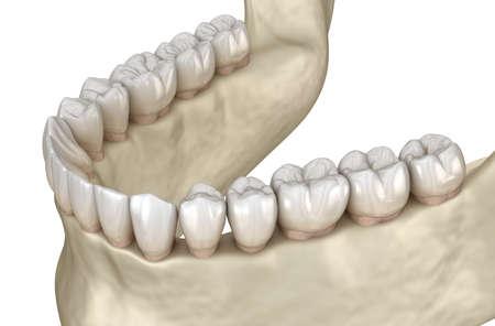 Mandibular jaw anatomy. 3D illustration concept of human teeth